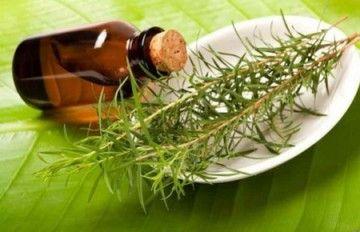 Ефірна олія від папілом: особливості використання чайного дерева