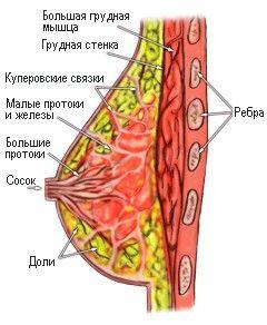 Вправи для відновлення грудних м`язів після годування